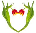 Red-yellow tulips heart Royalty Free Stock Photo