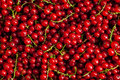 Redcurrant close up Royalty Free Stock Photo