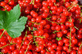 Redcurrant closeup on redcurrants with green leaf Stock Photography