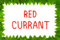 Red currant berries on white background. Fruit font, letters. Frame of leaves Royalty Free Stock Photo