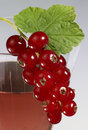 Redcurrant on glass Stock Photography