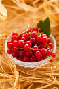 Redcurrant red currants in a crystal vase on hay background Stock Photography