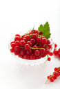 Redcurrant red currants in a crystal vase on a white background Royalty Free Stock Image