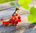 Redcurrant on wooden table Royalty Free Stock Images