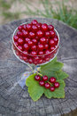 Redcurrants in a glass goblet full of Stock Images