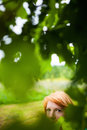 Reddish blonde woman hiding haired with expressive eyes in greenery Stock Photography