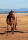 Reddish brown horse vertical shot of with white diamond standing on the plains with mountain range in background Stock Photos