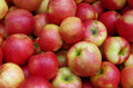 Reddish yellow apple pile apples ready for market close up Royalty Free Stock Images