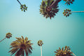 Redeo Los Angeles Palm Trees Vintage Royalty Free Stock Photo