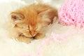 Redhead kitten sleep on white plaid a Royalty Free Stock Image