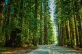 Redwood Highway, California Royalty Free Stock Photo