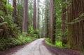 Redwood  NP California Royalty Free Stock Photo
