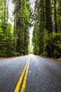 Redwoods highway through national park california usa Royalty Free Stock Photography
