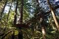 Redwoods Treewalk at Giant Redwoods forests in Rotorua New Zeala
