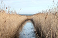 Reed Bed Stock Photos
