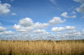 Reed and clouds Stock Images