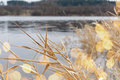 Reed grass on a bank in the sunlight Stock Photography