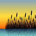 Reed silhouette with water reflection in sunset Royalty Free Stock Photography