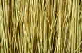 Reeds background texture in wide screen format Royalty Free Stock Image