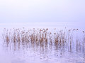Reeds at the garda lake in italy Stock Photos