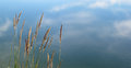 Reeds grass sky reflected in water Royalty Free Stock Image