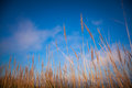 Reeds growing on the shore Stock Image