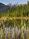 Reeds and mountains reflections mount howard douglas reflected in the still marshy waters of the vermillion lakes near banff ab in Royalty Free Stock Images