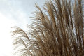 Reeds the part of in the nature Stock Photography