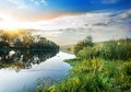 Reeds on the river and duckweed at sunset Royalty Free Stock Image