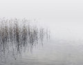 Reeds and water canes growing from the at the lake shore on a misty day Stock Image