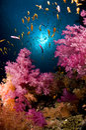 Y color de mar