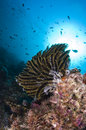 Reef, Colorful seastar, Maldives Stock Images