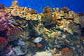 Reef coral Royalty Free Stock Photos