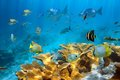 Reef with fish and elkhorn coral school of tropical caribbean sea Royalty Free Stock Image