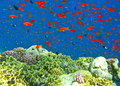 Reef Rush Hour Royalty Free Stock Photography