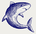 Reef Shark Royalty Free Stock Photo
