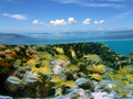 Reef and sky Royalty Free Stock Photos
