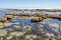 Reef and Tide Pools at Blue Holes Royalty Free Stock Photo