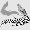Reeves s pheasant and silhouette of pheasant with a long empennage Stock Photos