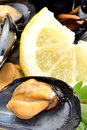 Ref mussels with lemon appetizer reef cooked in boiling water juice Stock Image
