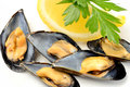 Ref mussels with lemon appetizer reef cooked in boiling water juice Royalty Free Stock Photo