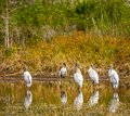 Reflecting Wood Storks In A Fl...