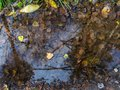 The reflection of branches in a puddle with leaves. Royalty Free Stock Photo