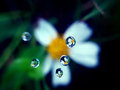 Reflection of flowers with macro lens in the water Stock Photography