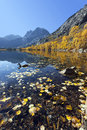 Reflection of mountains aspens and duck focus on swimming in foreground silver lake eastern sierra nevada california Royalty Free Stock Image