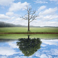 Reflection Of Old And New Tree.