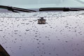 Reflection of the street lamp and raindrops on a car hood in parking lot Stock Photography
