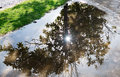 Reflection of the sun in a puddle after the rain