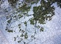 Reflection of tree branch on wet sidewalk Royalty Free Stock Photo