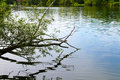 Reflection of a tree limb over a lake stretches out with its in the water on warm summer day the water catches the Stock Photos